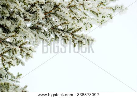 Fir Tree Spruce Branch In Winter Holiday Snow Isolated On White Background. Spruce Or Pine Tree In S