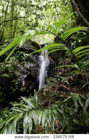 Peaceful And Beautiful Rain Forrest In Placencia, Belize