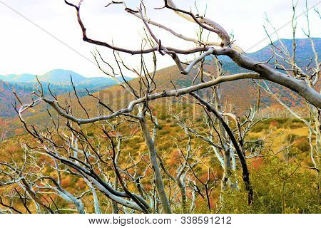 Dried Branches Creating An Abstract Texture On An Arid Desolate Landscape Caused By Drought And Wild