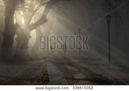 Mystical Fog In A Winter Night Park With A Snow-covered Path.