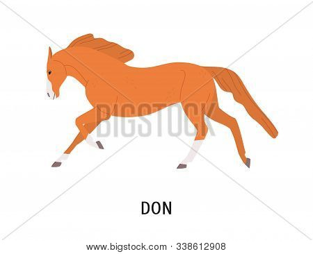 Don Horse Flat Vector Illustration. Beautiful Pedigree Equine, Russian Breed Hoss. Horse Breeding, E
