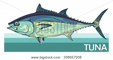 Tuna Fish Is A Species Of Mackerel. Tunny. Thunnus. Fish For Labels, Logo, Packaging. Fishing For Tu