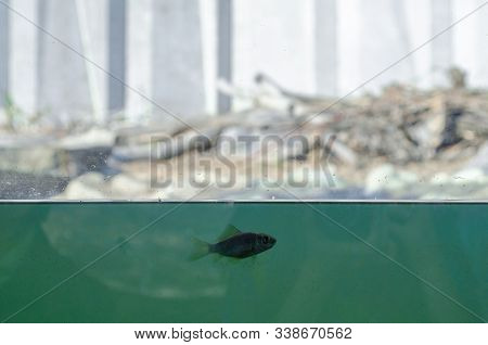 One Small Lonely Fish In A Large Blue Water, Aquarium, Behind It A Whole World, Dry, Light, But Inho