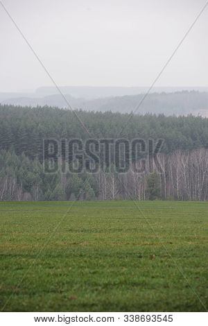 Misterious Landscape. Green Field And Remote Dark Forest In Quiet Misty Morning Copy Space Vertical
