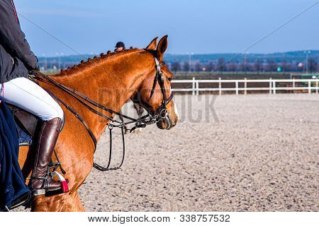 Horse Riding .young Girl Riding A Horse . Equestrian Sport In Details. Sport Horse And Rider On Gall