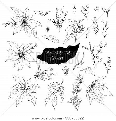 Hand Drawn Set, Isolated Flowers On White Background. Realistic, Monochrome Doodles. Modern Flowers