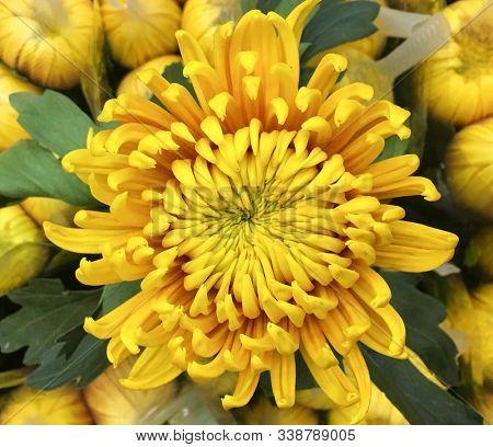 Decorative composition of yellow chrysanthemum flowers, autumn bouquet