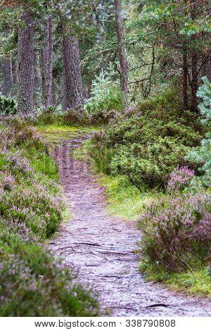 Path Tru The Highlands