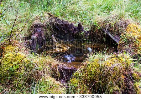 Water In A Tree Stump