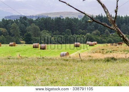 Hay Bails In The Highlands