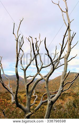 Dry Branches On A Parched Tree Overlooking A Barren Landscape Taken In The Lower Elevations Of The R