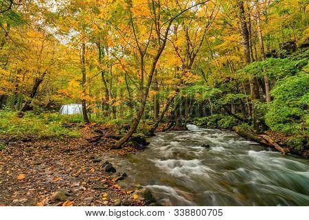 Clear Oirase Mountain Stream Flow Through The Forest Of Colorful Foliage Of Autumn Season At Oirase
