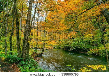 Beautiful View Of Colorful Foliage Forest In Autumn Season With Oirase Mountain Stream Flow Passing