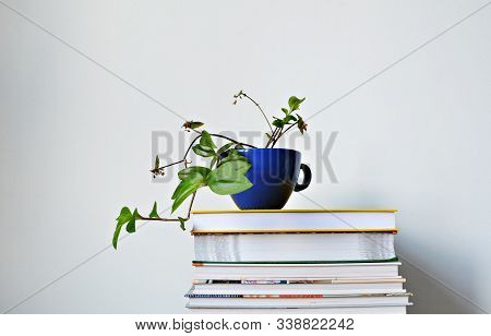 Tradescantia Green House Plant In Blue Cup And Stack Of Books