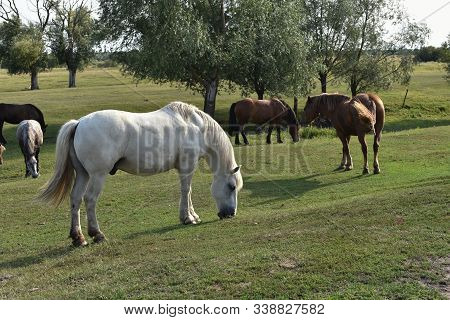 Horse On A Summer Pasture. Horse In The Village. Horse In A Village Or On A Ranch. Summer, Ranch, Ho