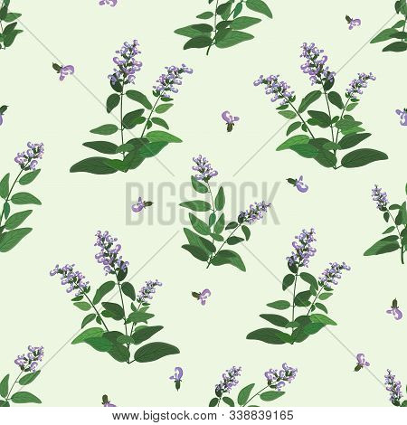 Seamless Pattern With Green And Blooming Sage Branches. Vector