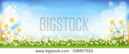 Vector Summer Nature Background With Cute Tiny Daisy Flowers And Green Grass Fields. Spring Backgrou