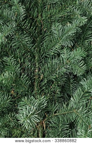 Spruce Branch. Fir Branch. A Branch Of An Evergreen Tree. Christmas Background. New Year Background.