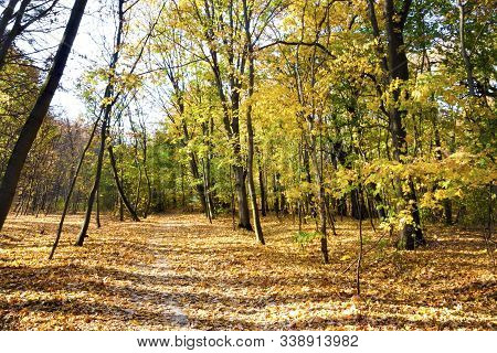 Autumn Landscape. Walkway In The Deciduous Forest On An Autumn Sunny Day. Lysa Hora, Kyiv, Ukraine
