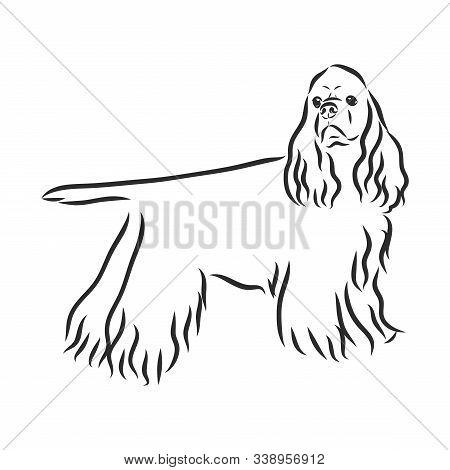 English Spaniel Russian Spaniel Dog. Hand Drawn. Vector Illustration