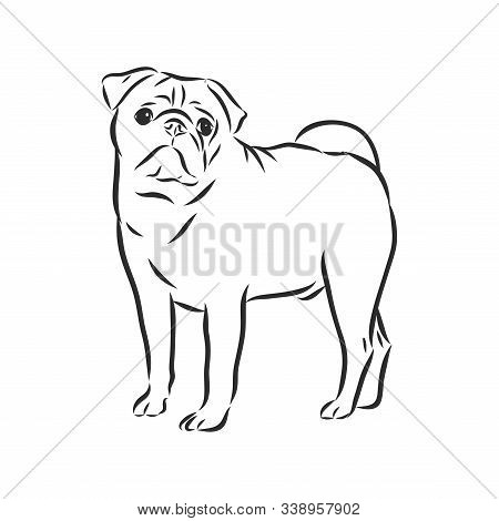 Pug Dog Black And White Hand Drawn. Funny Happy Smiling Pug, Sitting And Looking Forward. Dogs, Pets