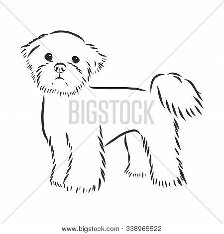 Vector Sketch Funny Dog Maltese Breed Sitting Hand Drawing Vector