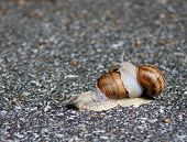 two snails one rides other drives on poster