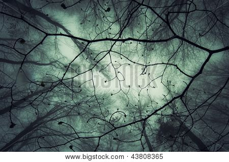 View up in the canopy in a magic enchanted forest with fog