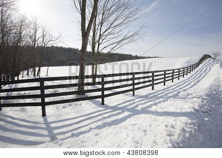 Winter Fence Lines
