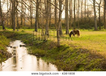 Picture of a pony eating grass in a rural setting with a small stream poster