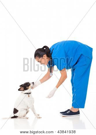 vet doctor playing with dog isolated on white background poster