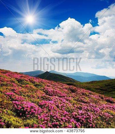 Daytime landscape with red flowers of rhododendron