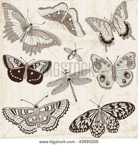 Vector Set: Calligraphic Butterfly Design Elements and Page Decoration