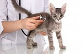 Veterinarian examining a kitten isolated on white poster