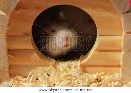 Hamster And Its Home
