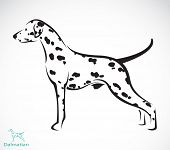 Vector image of an dalmatian dog on white background poster