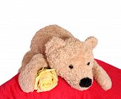 bear with pillow poster