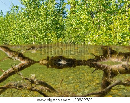 Riparian Ecosystem Taiga Lake Shallow Shore Water