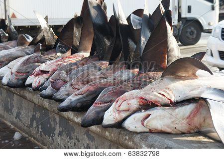 Sharks as Food