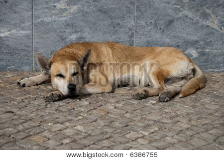 A Dog is laying on the street poster