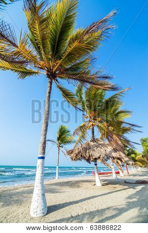 Row of palm trees on a beach in Covenas Colombia poster