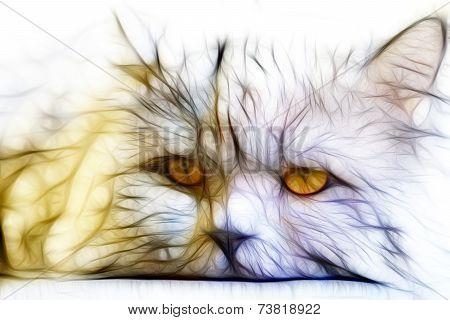 Fractal Cat Illustration