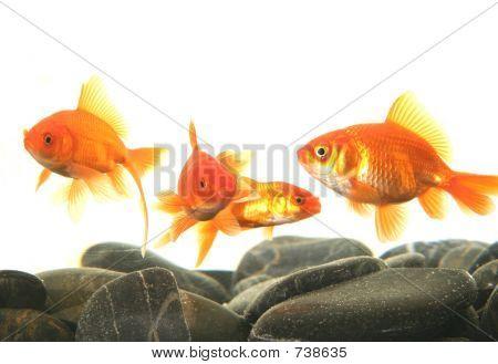 stonefish2