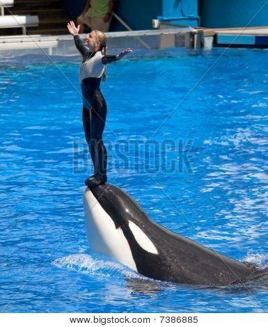 Dangerous Killer Whale