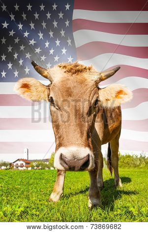 Cow With Flag On Background Series - United States Of America