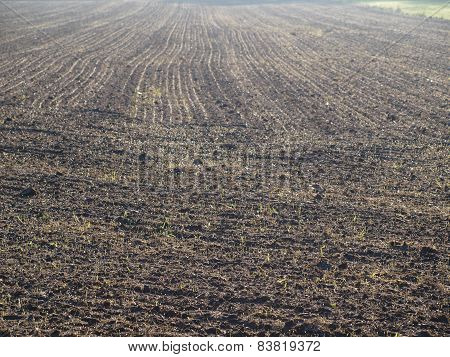 fields sown in the autumn, southern Bohemia, Czech Republic