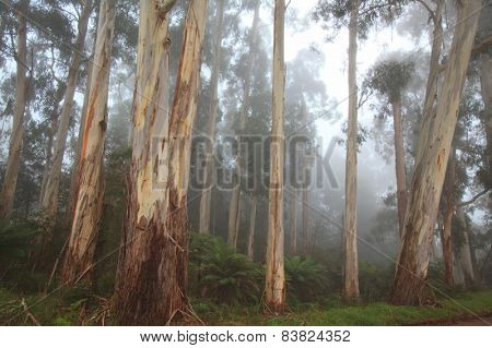 Majestic mountain forest