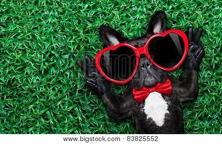 Dog In Love On Grass