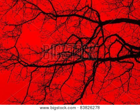 Bough And Twigs In Red Back