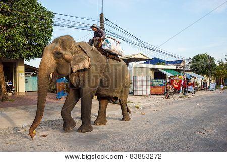 Elephant in Sihanoukville